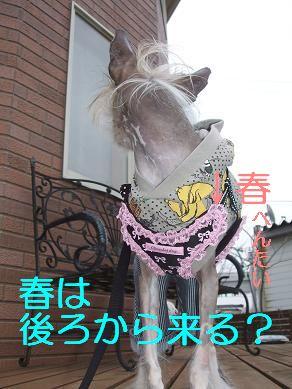 f0179203_1510511.jpg