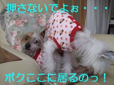 f0179203_925470.jpg