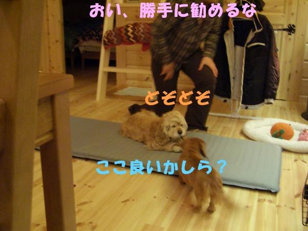 b0067012_095421.jpg