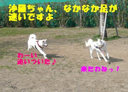 f0121712_114462.jpg
