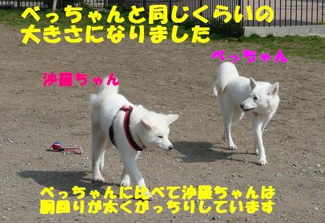 f0121712_121730.jpg