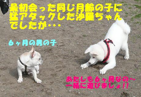 f0121712_131478.jpg