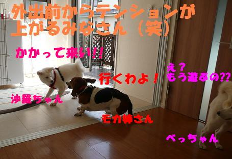 f0121712_13188.jpg