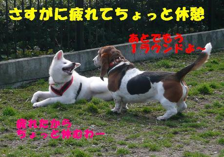 f0121712_135058.jpg