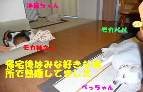 f0121712_21473.jpg