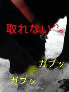 f0148927_9571619.jpg