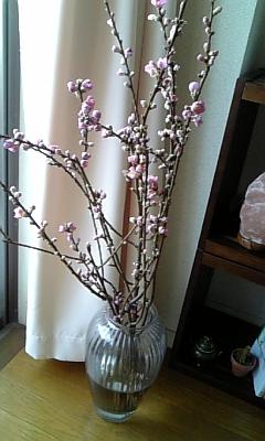 桃の花_f0008555_18125784.jpg