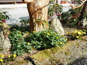 春よ来い_f0202563_9353667.jpg