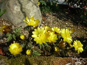 春よ来い_f0202563_9363035.jpg