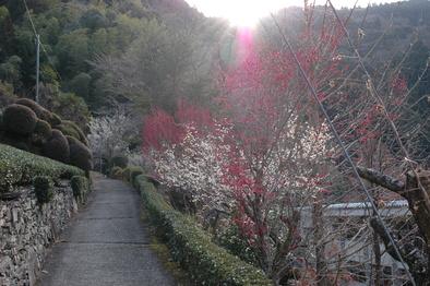 春よ来い_f0202563_9403431.jpg