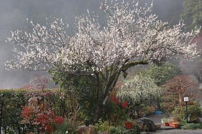 春よ来い_f0202563_9472113.jpg