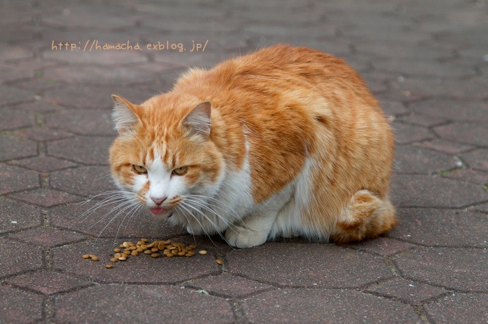 Cats In Hibiya Park #12_c0158775_2026526.jpg