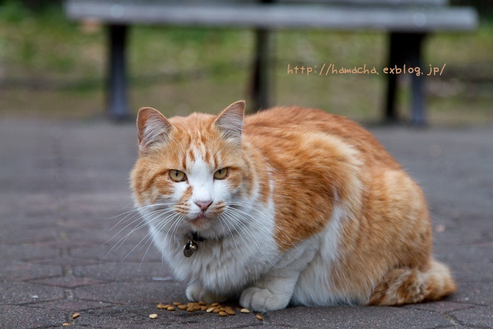 Cats In Hibiya Park #12_c0158775_20275730.jpg