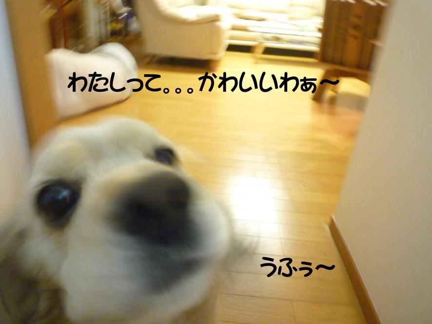 f0218182_1632851.jpg