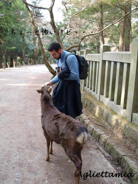 イタリア人 in  GIAPPONE (奈良)_c0179785_7412764.jpg