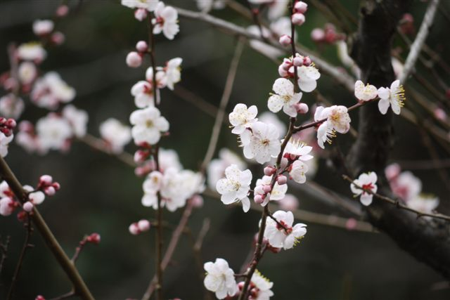 横浜・三渓園と元町をぶらぶらと_b0175688_23531997.jpg