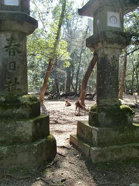 お散歩・・・春日大社編_a0122205_14161941.jpg