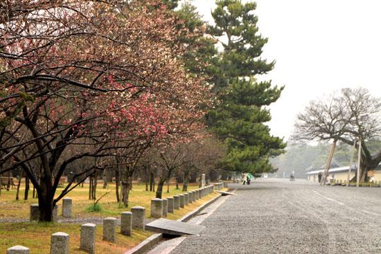 京都御苑 梅園_e0048413_21224275.jpg
