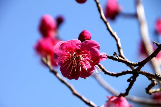 京都御苑 梅園_e0048413_21235128.jpg