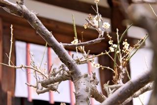 週末旅行 : 奈良1日目_d0010432_17192778.jpg