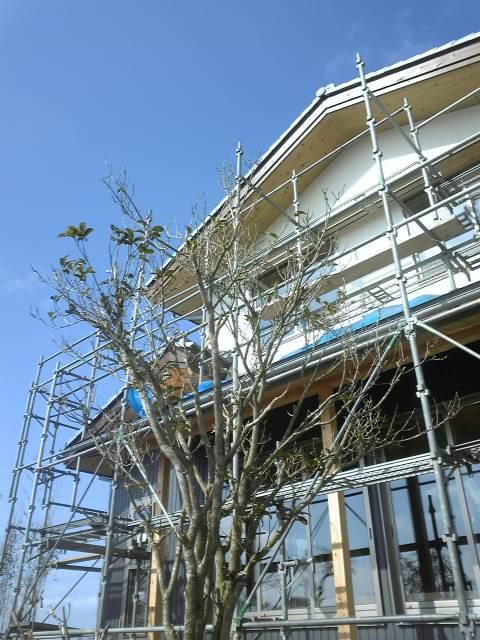 福島潟の家 工事状況_c0170940_19564234.jpg