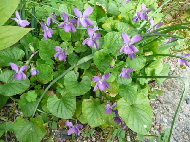 我が家の花です♪_f0099147_2252311.jpg