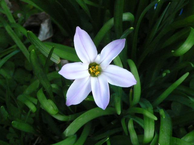 我が家の花です♪_f0099147_22524685.jpg