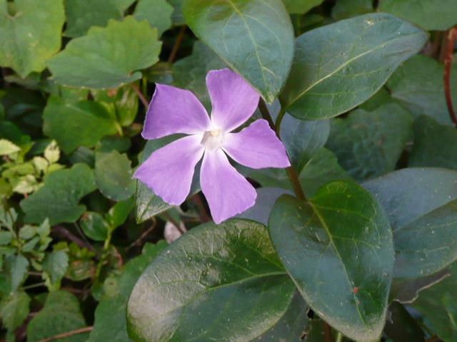 我が家の花です♪_f0099147_2255776.jpg
