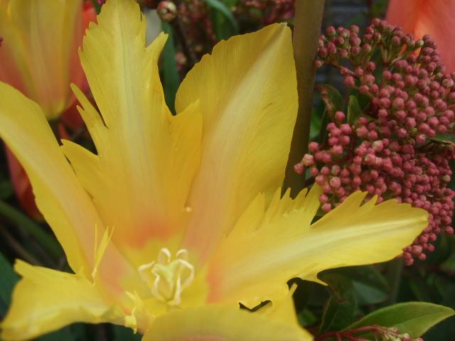 オークリーフ(BeROSEさん開店の花)_f0049672_16412884.jpg