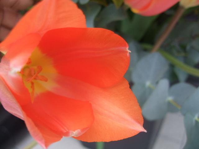 オークリーフ(BeROSEさん開店の花)_f0049672_16453869.jpg