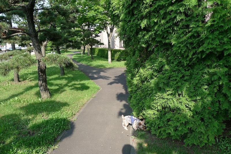 写真を撮りながらいつもの散歩 カメラを落とす 無事も3か所はげた _a0160581_14233971.jpg