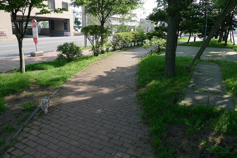 写真を撮りながらいつもの散歩 カメラを落とす 無事も3か所はげた _a0160581_1423564.jpg