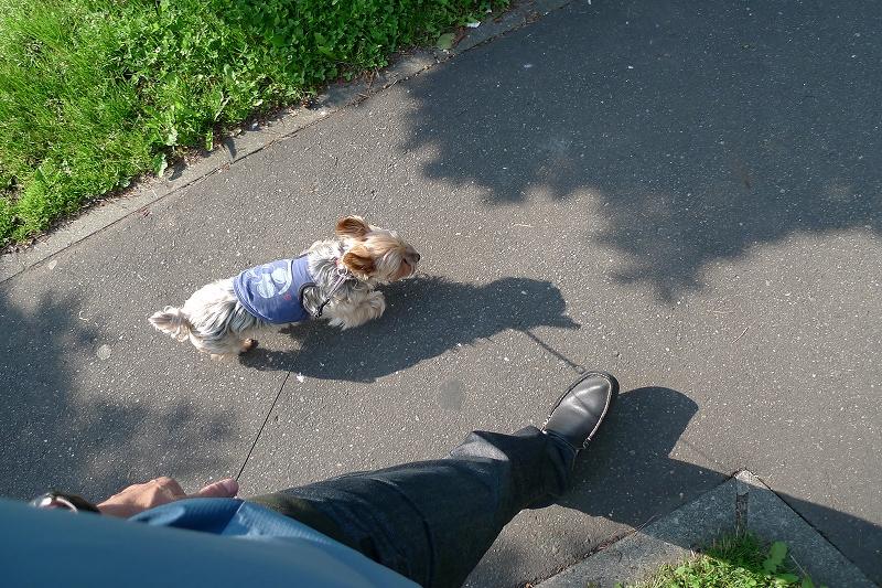 写真を撮りながらいつもの散歩 カメラを落とす 無事も3か所はげた _a0160581_14241938.jpg