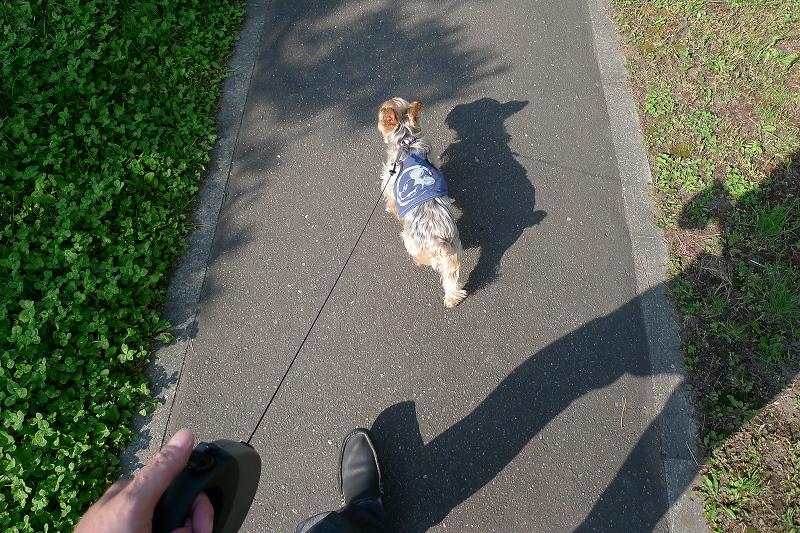 写真を撮りながらいつもの散歩 カメラを落とす 無事も3か所はげた _a0160581_142486.jpg