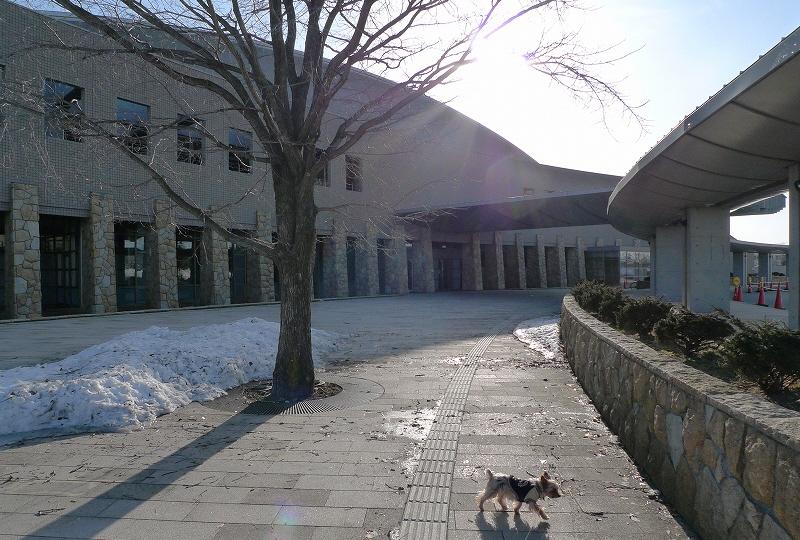 白鳥アリーナは散歩コース_a0160581_14305410.jpg