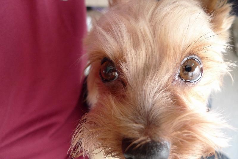 アップ Leica D-Lux4_a0160581_14385082.jpg