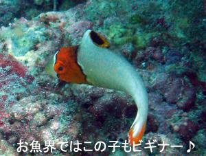 友情ダイビング!!_f0144385_2042279.jpg