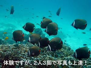 友情ダイビング!!_f0144385_20522488.jpg