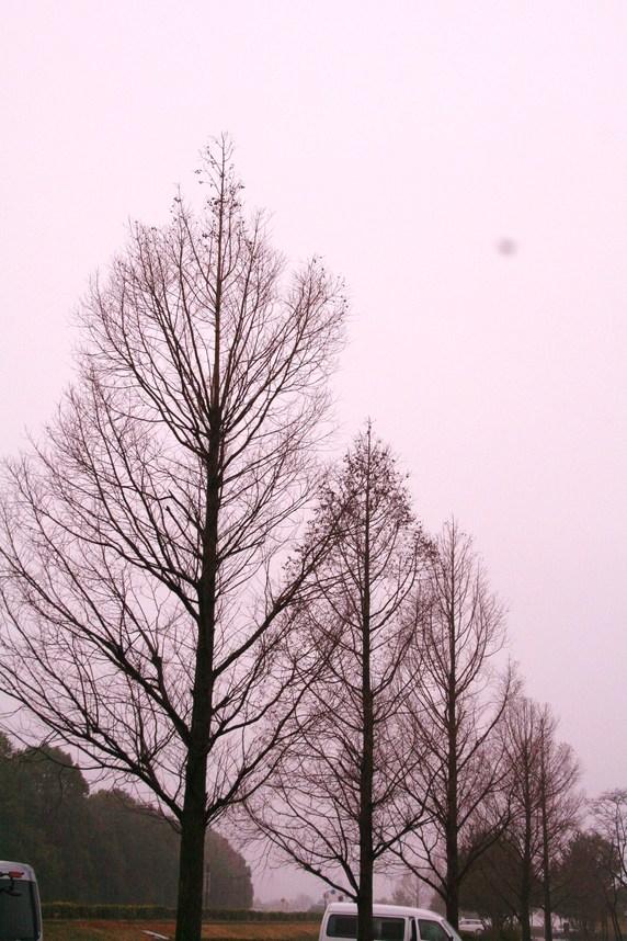 琵琶湖は霧の中だった 滋賀県立近代美術館シュウゾウ・アヅチ・ガリバー展_c0100195_9554542.jpg