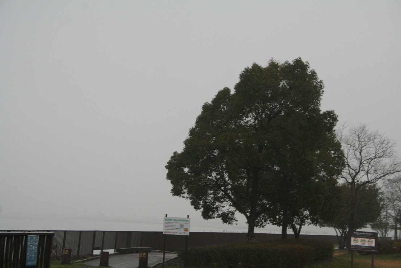 琵琶湖は霧の中だった 滋賀県立近代美術館シュウゾウ・アヅチ・ガリバー展_c0100195_9564235.jpg