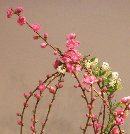 桃の花_c0129404_07574.jpg