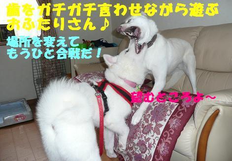 f0121712_20134787.jpg