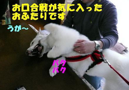 f0121712_203724.jpg