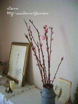 桃の花_e0127625_2155196.jpg
