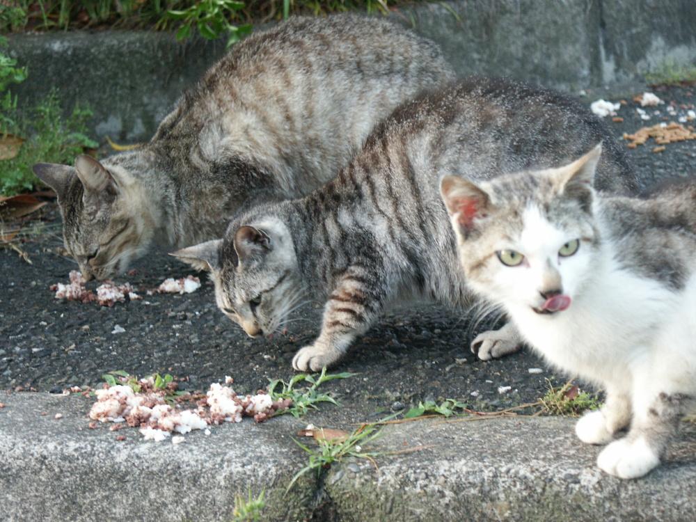 公園のホームレス猫たち  3  食事_f0214527_11182563.jpg