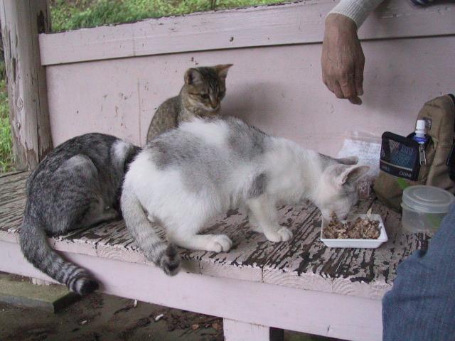 公園のホームレス猫たち  3  食事_f0214527_11225783.jpg