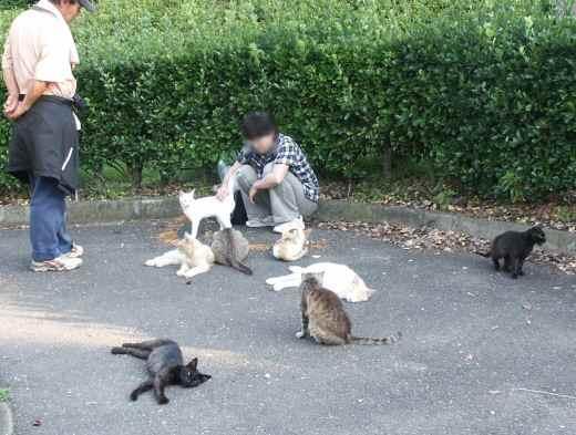 公園のホームレス猫たち  3  食事_f0214527_11244048.jpg