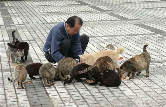 公園のホームレス猫たち  3  食事_f0214527_116356.jpg