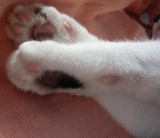 アポロチョコ猫 空編。_a0143140_1675787.jpg