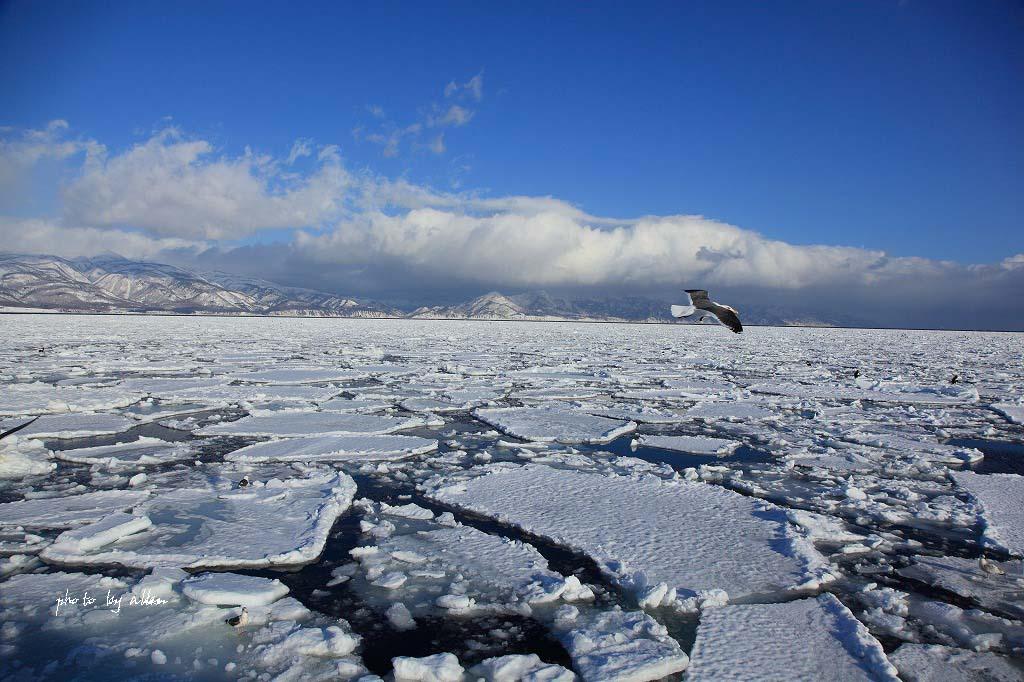 羅臼の流氷より~_a0039860_14273435.jpg